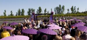 purple-parasols1-300x138